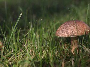 Mushroom Advice